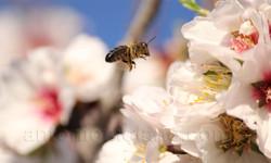 abeja volando.jpg