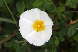 flor 2.jpg