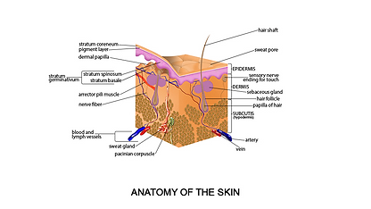 SKIN LAYERS.png