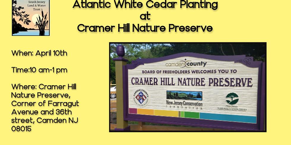 Atlantic White Cedar Planting at Cramer Hill