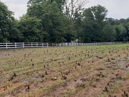 New Farmland Permanently Preserved!
