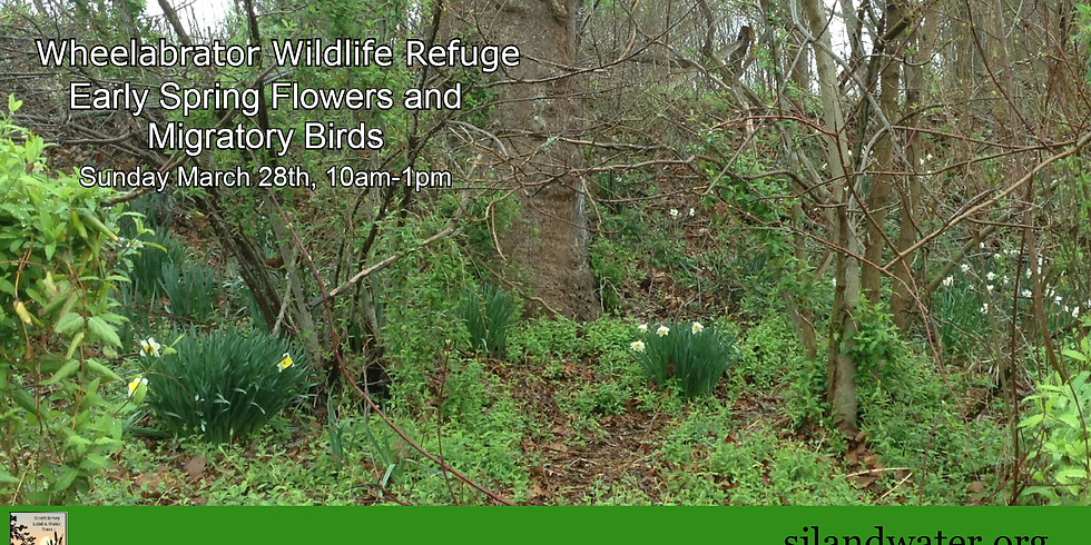 Early Spring Wildflowers and Migratory Bird Walk