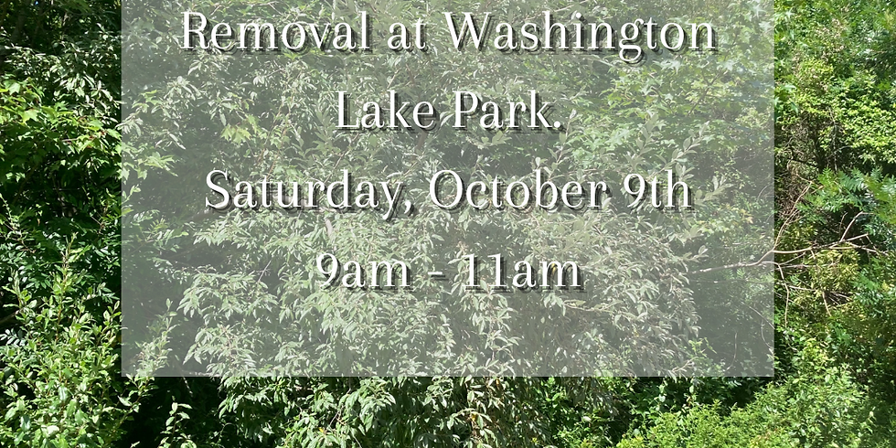 Invasive Species Walk and Removal