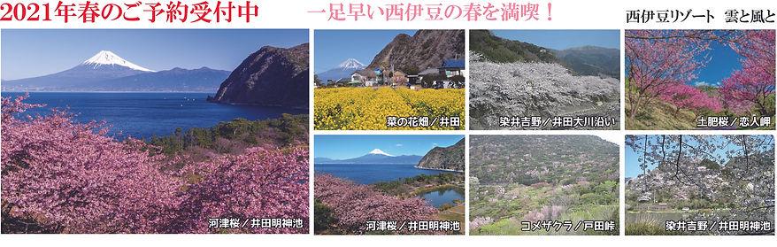 春のご予約受付中.jpg