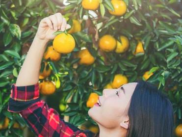 يجب على منتجي الأغذية استخدام البلوكتشين لاستعادة ثقة المستهلك