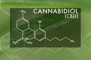 Cannabidiol-is-non-psychoactive-CBD-1155