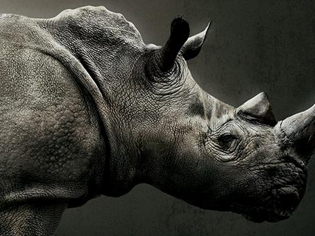 ¿Cómo desarrollar un plan de contingencia usando rinocerontes?