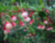 prinsesse bær.jpg