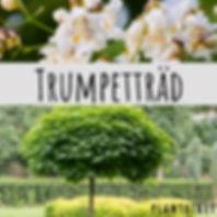 trumpetträd.jpg
