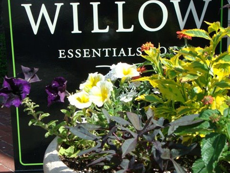 The Willow in Exeter