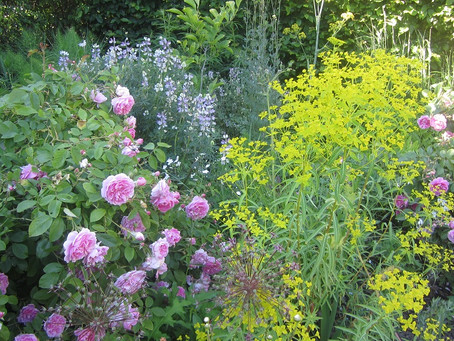 4 Waterworks Cottages & Woodlands NGS Charity Opening June 2020