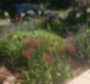 Front Gravel Garden in Early Summer