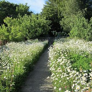 4 Waterworks Cottage Perennial Wildflower Meadow