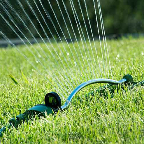 Fall Lawn Series: Quality Control / Germination Review