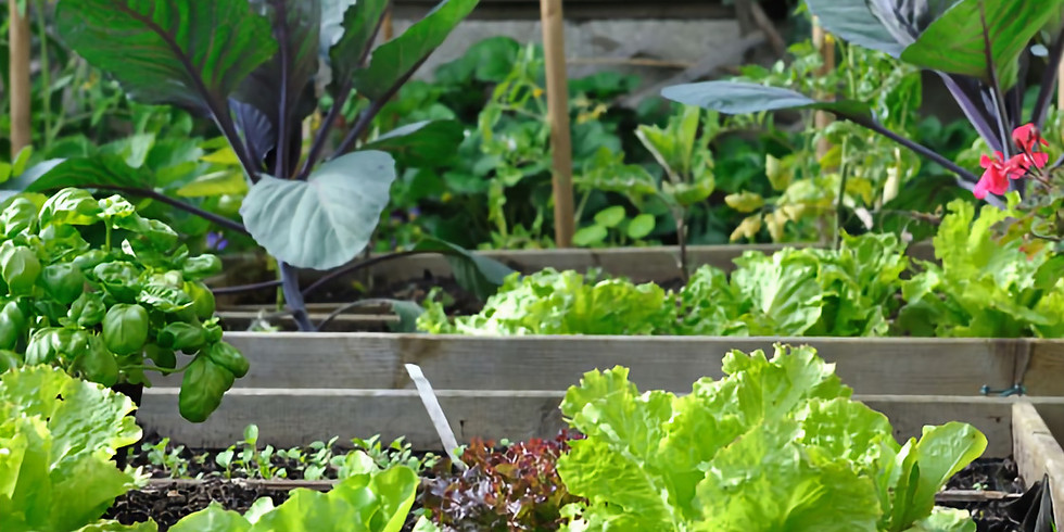 Planting a Victory Garden - ONLINE