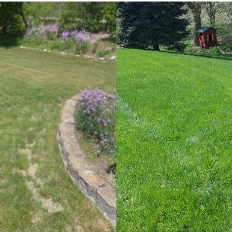 Fall Lawn Series: Product application / Top dressing and seeding (1)