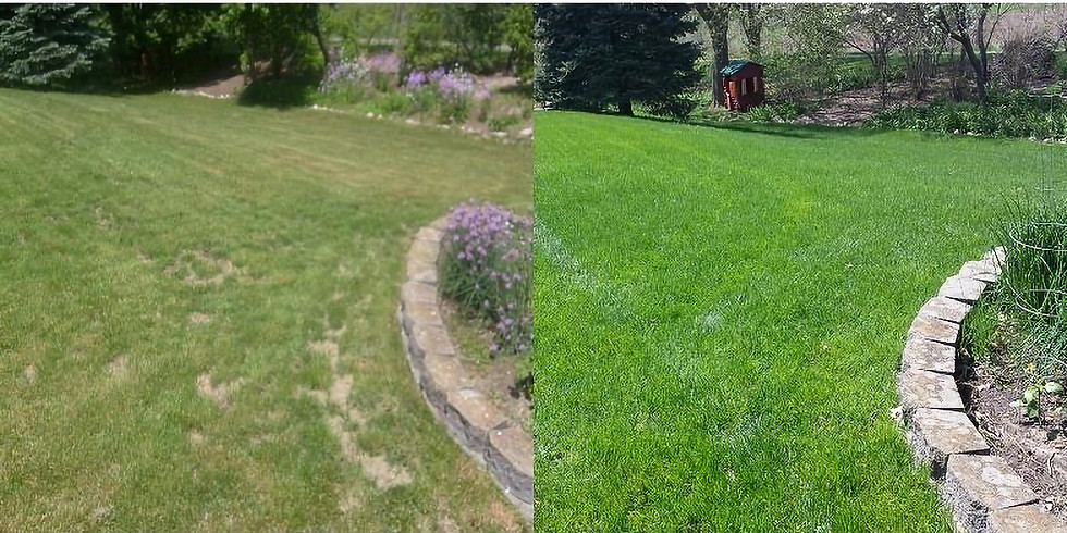 Fall Lawn Series: Product application / Top dressing and seeding