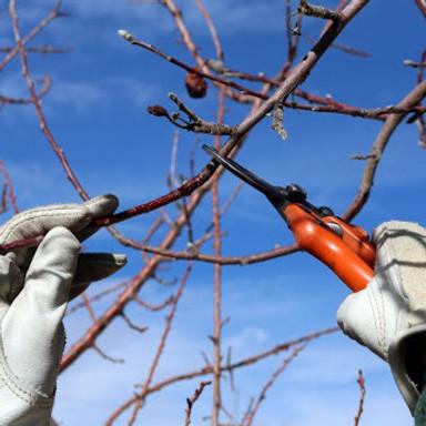 Tree Pruning Class