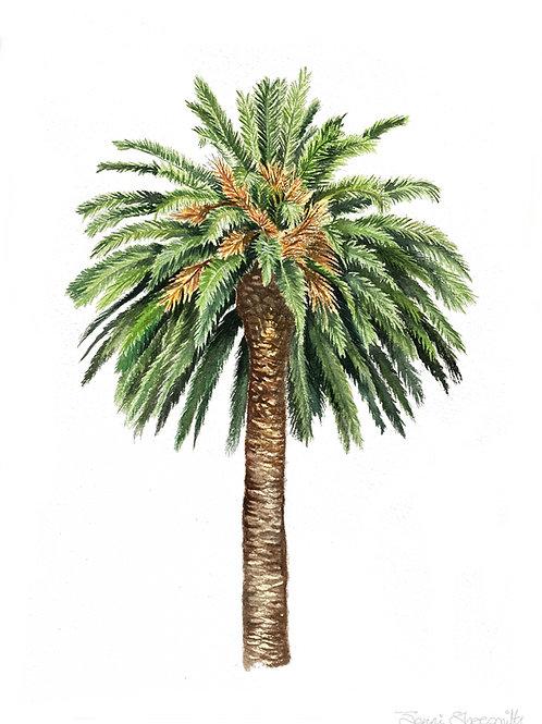 Canary date Palm