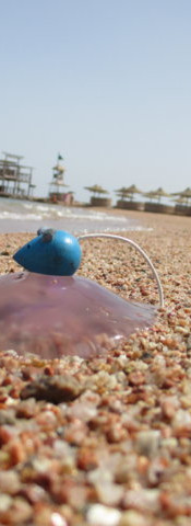 Hurghada Makadi Bay Mer Rouge Egypte FIL