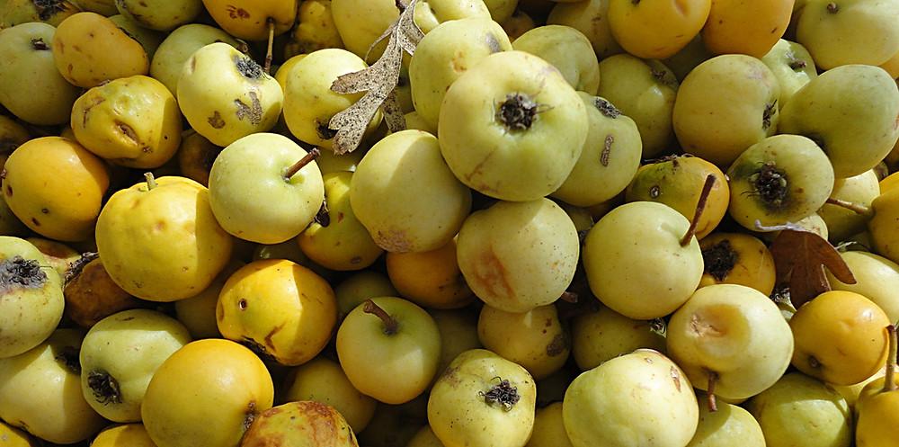Mosfila - Arazole fruit