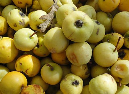 Arazole jelly - Mosfilo jam