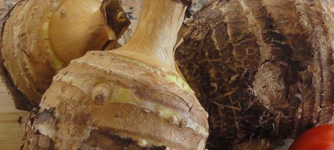 taros close up image