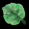 leaf no background.png