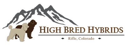 HighBredHybrids_logo_Tibetan_Mastiff_Masti_Doodle_Masti_Poo_Tibetan_Masti_Doodle_Tibetan_Masti_Poo_Tibetan_Mastiff_Poodle