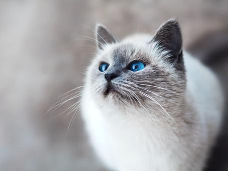 Curiosity Does Not Kill the Cat!