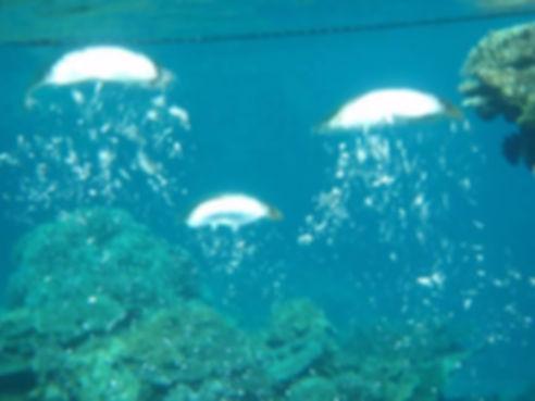 marine bulles.jpg