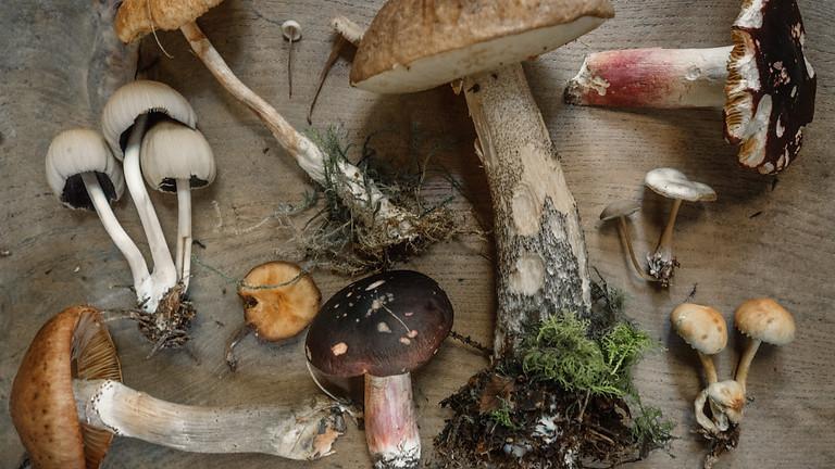 Workshop: Wild mushroom identification