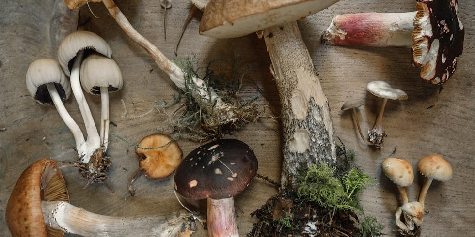 Mushroom identification workshop