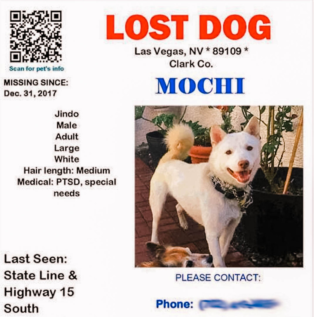 Lost Jindo Dog Banner