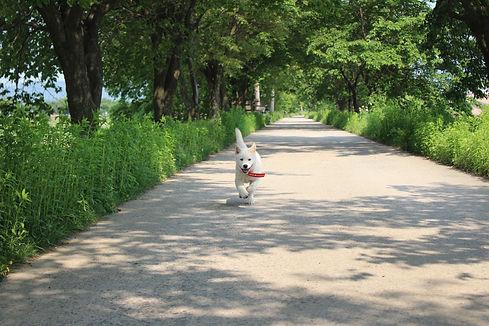 cute-running-puppy-love-my-jindo-min.jpg