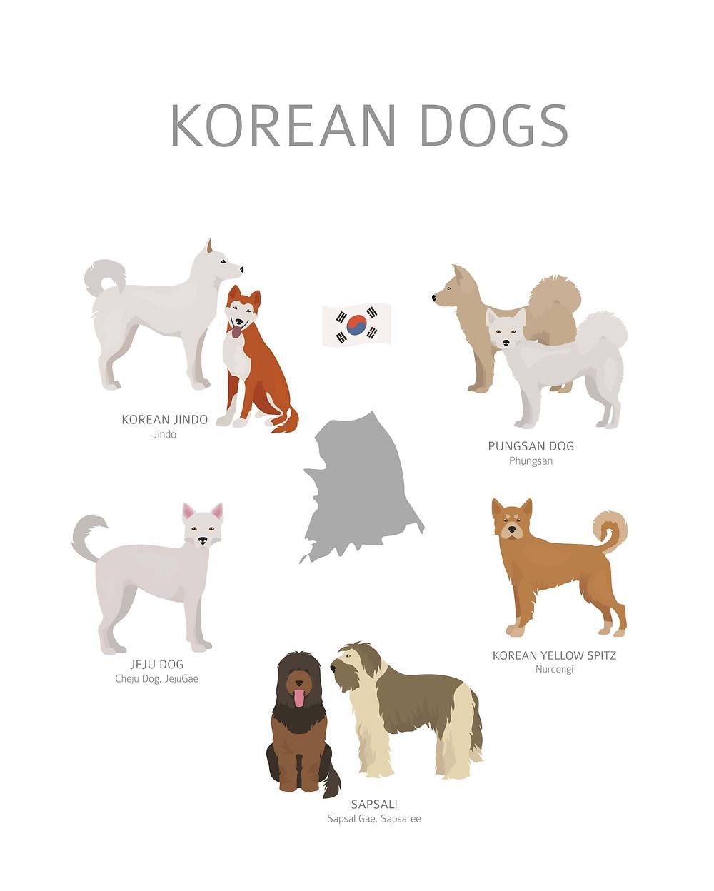 Korean Dog Families
