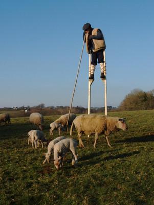 Année du mouton