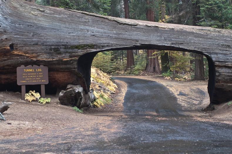 トンネル・ログ