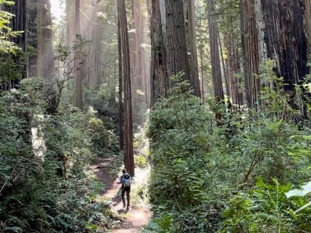 太古の森レッドウッド国立州立公園ハイキング情報