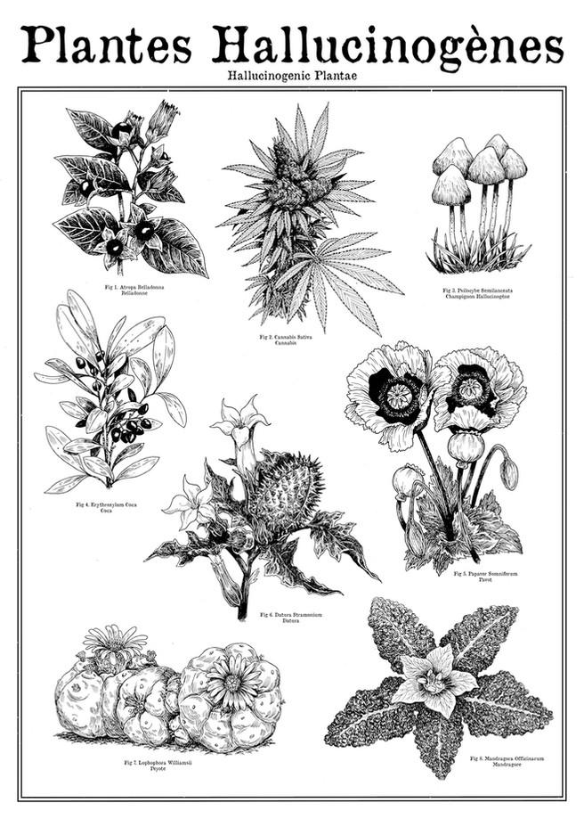 plantes H light.jpg