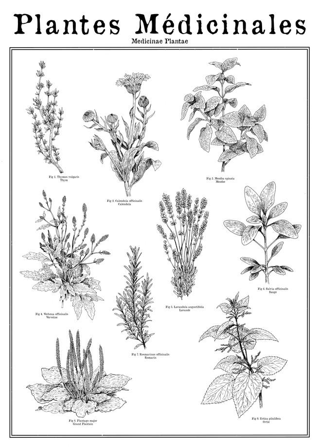 plantes M.jpg