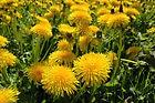 viridi-green-i-uBAOo_BBA-unsplash.jpg