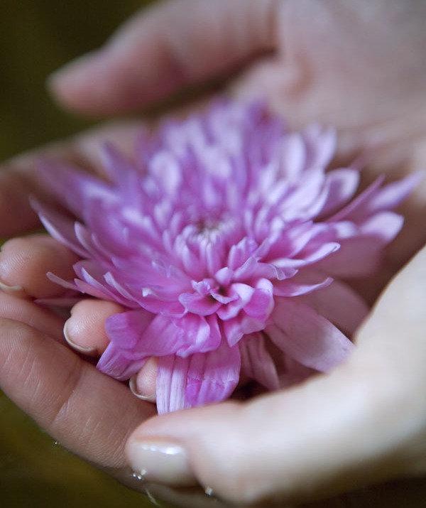 Flower in Hand  2014-9-17-10:19:6