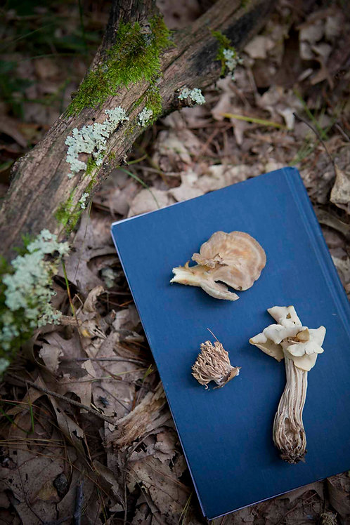 Incorporating Medicinal Mushrooms into Your Herbal Practice   Gina Rivers Contla