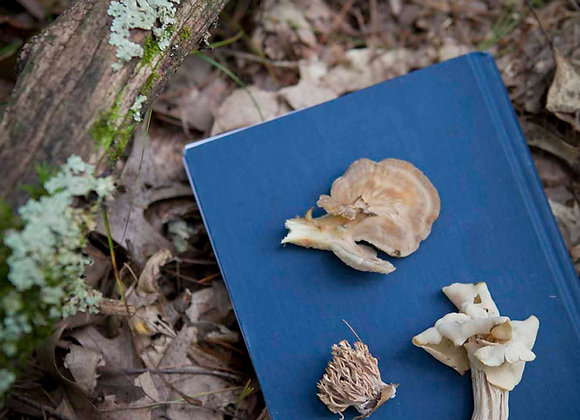 Incorporating Medicinal Mushrooms into Your Herbal Practice - Gina Rivers Contla