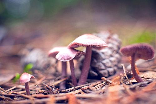 Moving Like a Mushroom Yoga Sunday | Mary Bue
