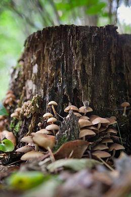 mycelium_mysteries18_157 copy.jpg