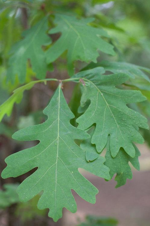 "Nourishing Nettle: ""Let Food Be Thy Medicine"" | Rachel Liester"