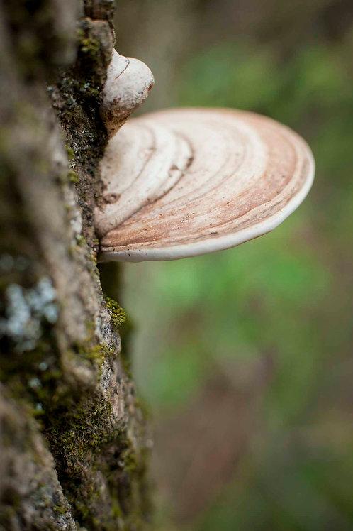 Fungi and the Feminine | Sonia Horowitz