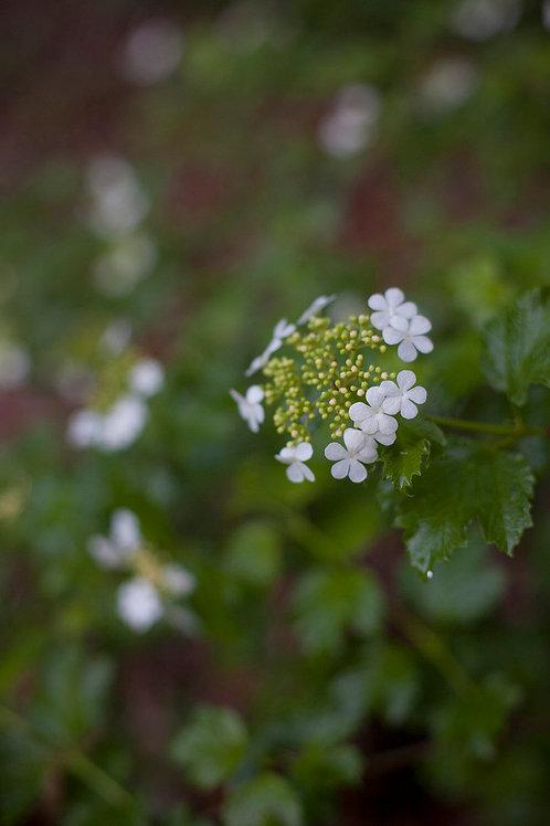 Menopause A Second Spring | EagleSong Gardener